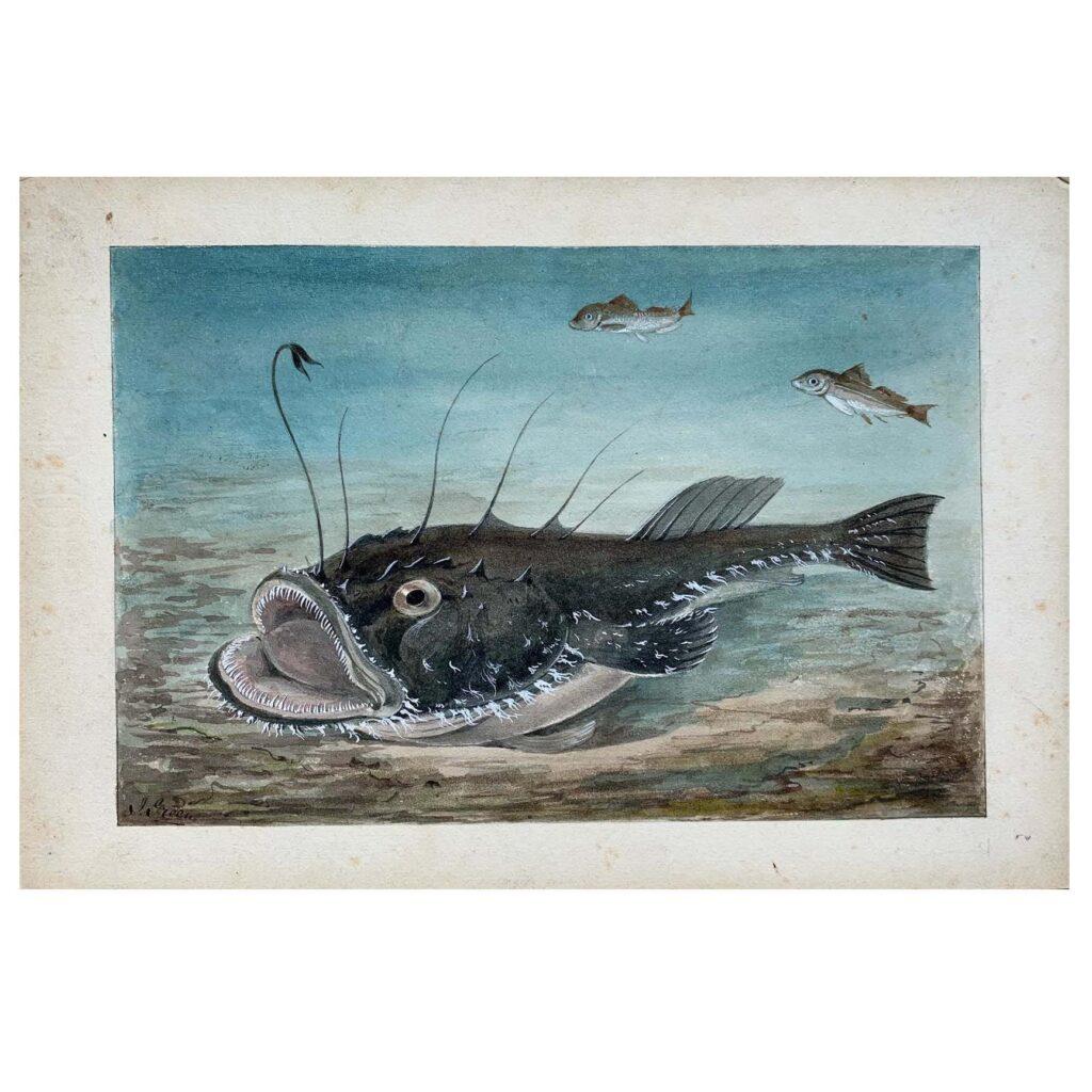 An original vintage illustration of an Angler Fish, c. 1910s - 1920s