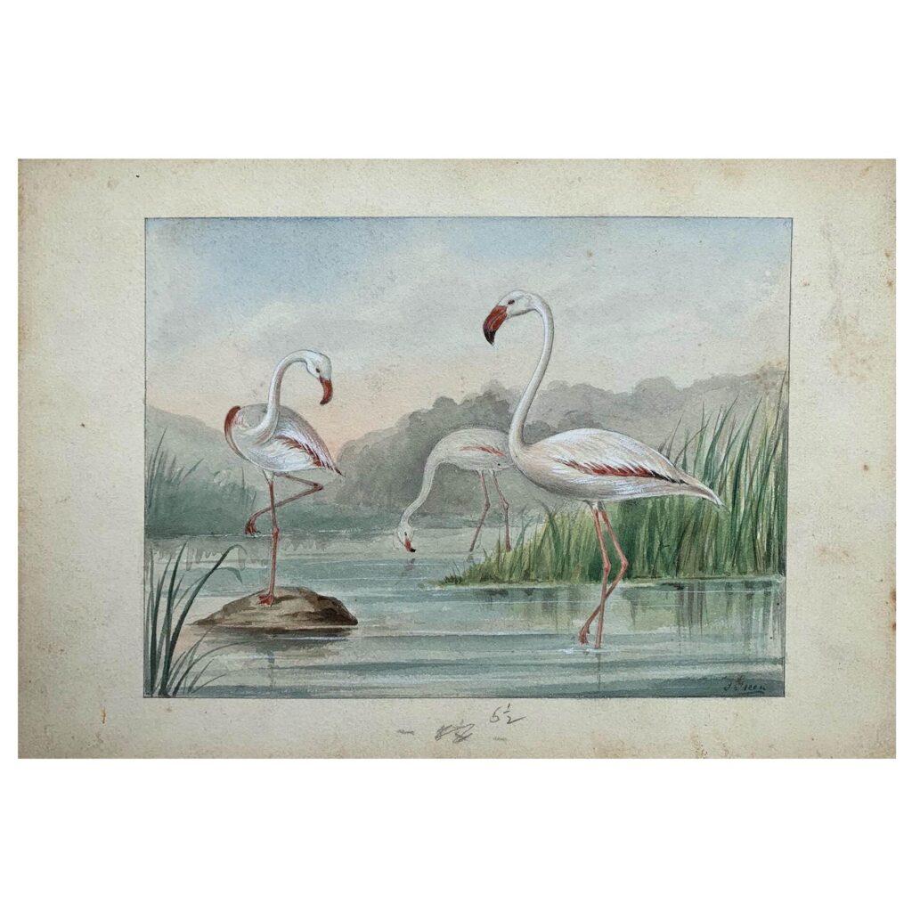 An original illustration of Flamingo, c. 1910s /1920s