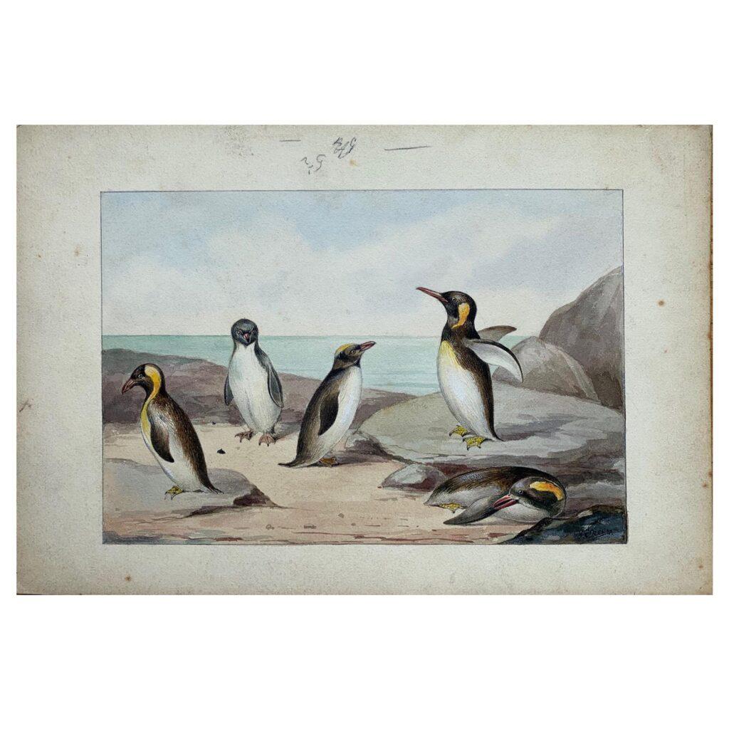 Original vintage illustration of Penguins, c1910s /1920s